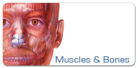Muscles & Bones