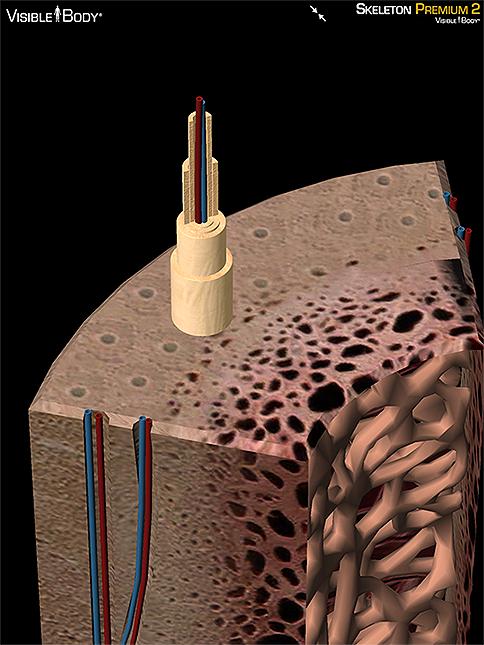 osteon bone structure compact bone