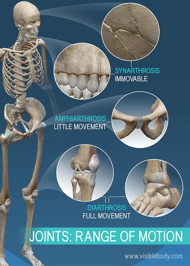 schmerzen gelenke in den knie auf der kniescheibe beim drauf knien.jpg