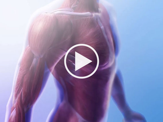 An explanation of the muscular system and motion