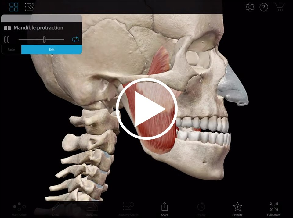 Mandible protraction and retraction in Muscle Premium by Visible body