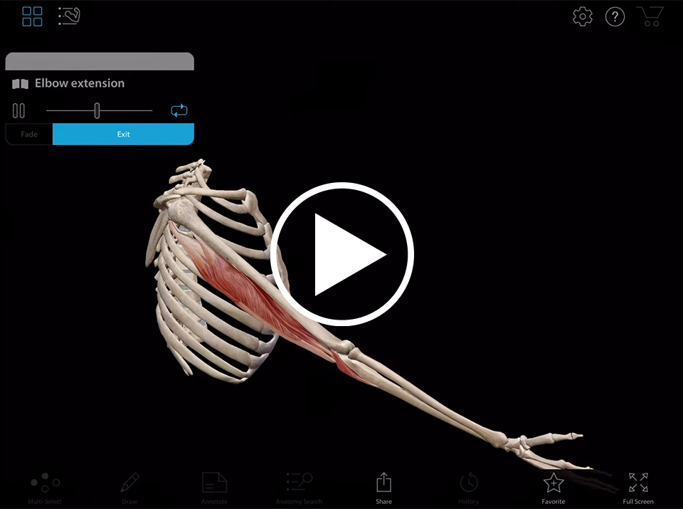 Elbow extension animation in Muscle Premium by Visible body
