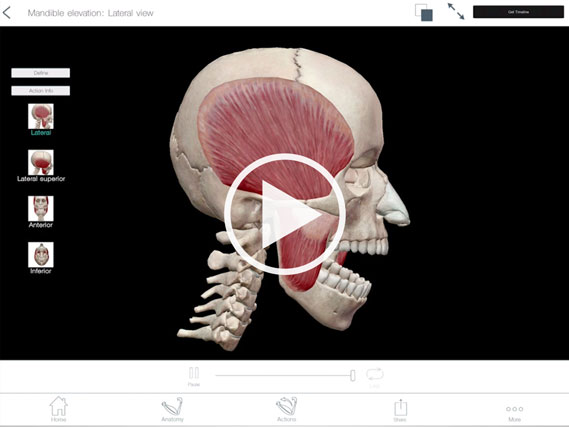 Mandible elevation animation using Muscle Premium by Visible body