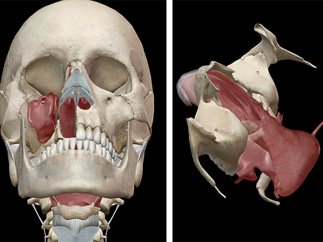 my nasal cavity burns - 650×488