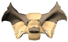 Sphenoid bone body