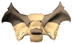 3d skeletal system: function of the sphenoid, Human Body