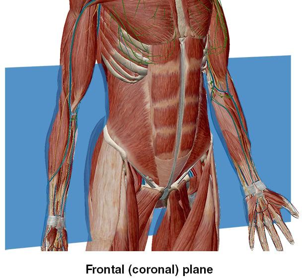 Frontal Plane Coronal Sagittal midline