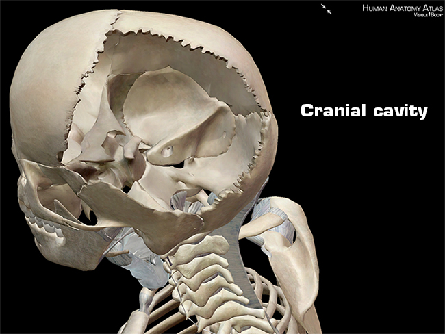 Anatomy and Physiology: Anatomical Planes and Cavities