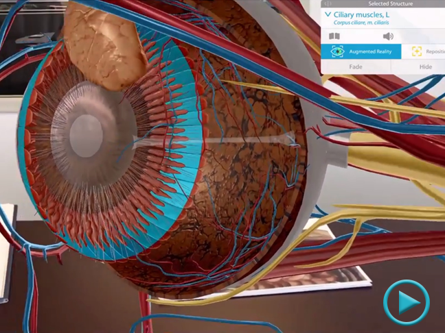 Microanatomy in Augmented Reality