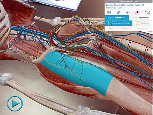 Augmented Reality in Human Anatomy Atlas for iOS 11
