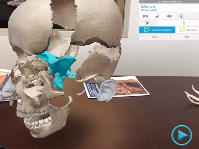 Sphenoid-Disarticulated-Skull-ARKit.png