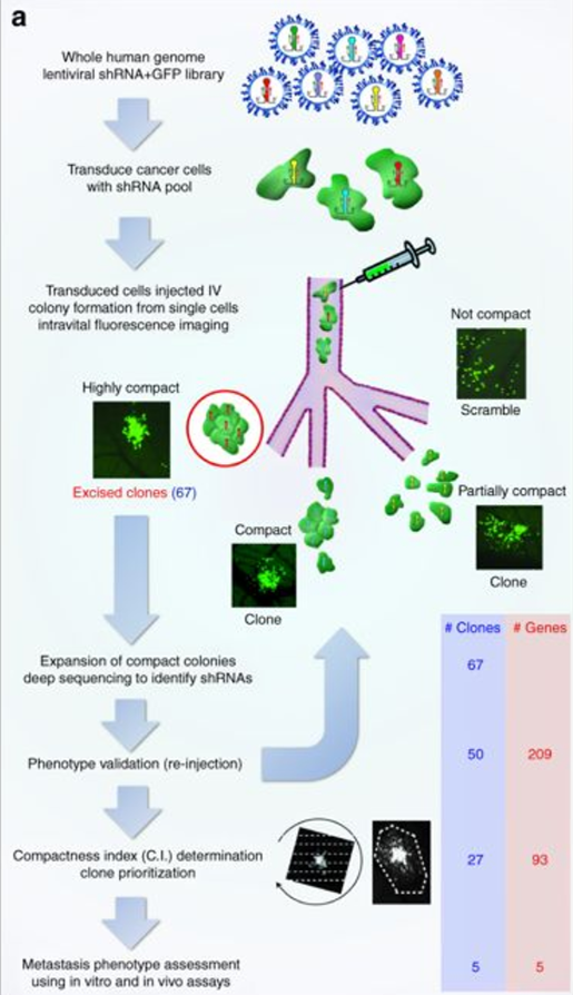 genetics-cell-motility-infographic