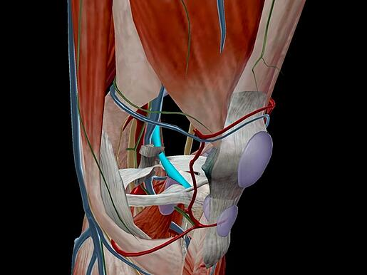 A Tale Of Kittens And Ballers The Anatomy And Pathology Of Acl Tears