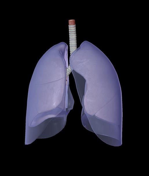 ai-in-medicine-lungs