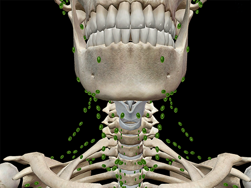 Lymph-nodes-lymphatic-system-immune-anatomy
