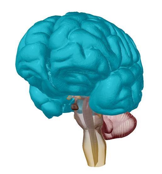 cerebral-cortex-alzheimers