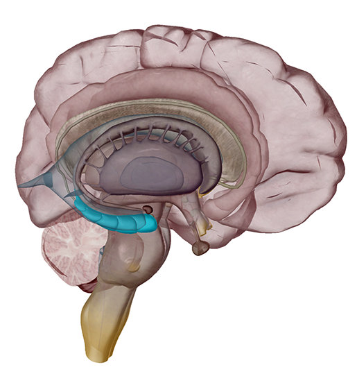 hippocampus-memory-alzheimers