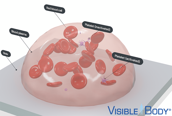 3d-blood-cell-rbc-platelets-logo