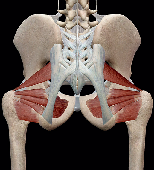 hip-lateral-rotators-all