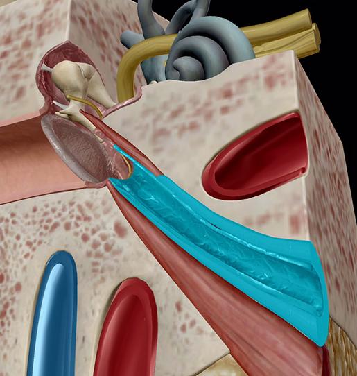middle-and-inner-ear-eustachian-tubes