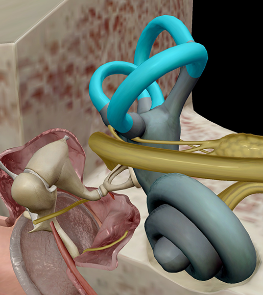 middle-and-inner-ear-semicircular-canals