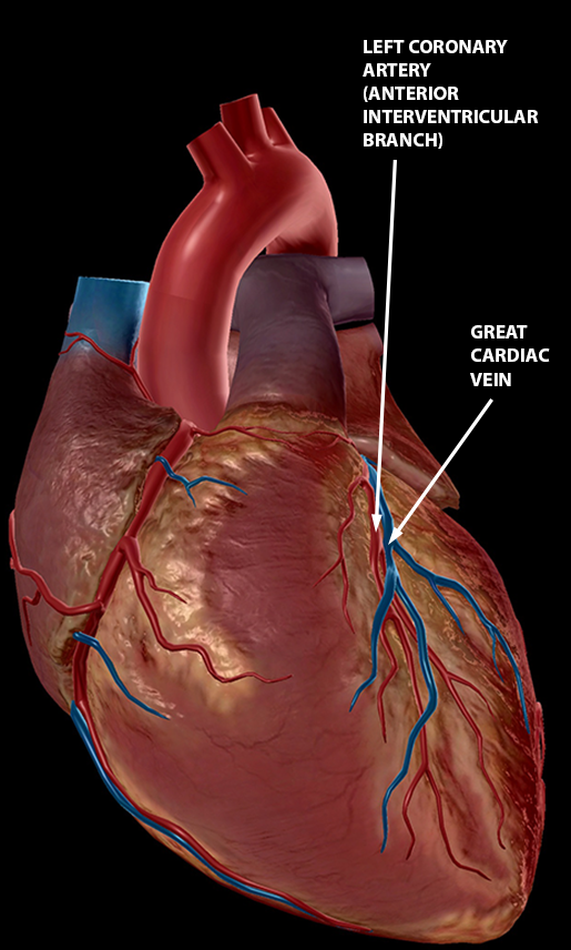 What's Blood Got To Do With It? Blood Vessel Basics