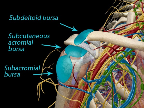 Bursitis: The Fallen Heroes of Joint Mobility