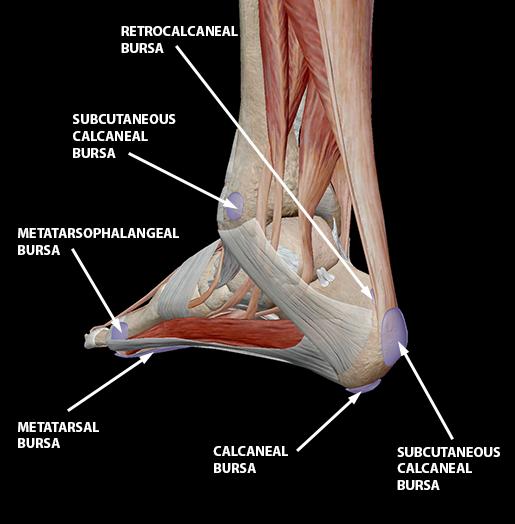 bursitis-foot-ankle-bursae-update
