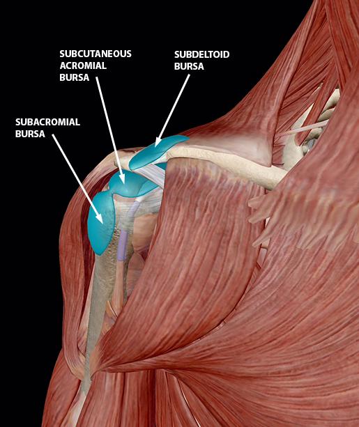 bursitis-shoulder-bursae-closeup-update