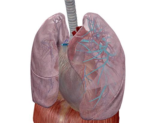 cf-blog-lower-respiratory