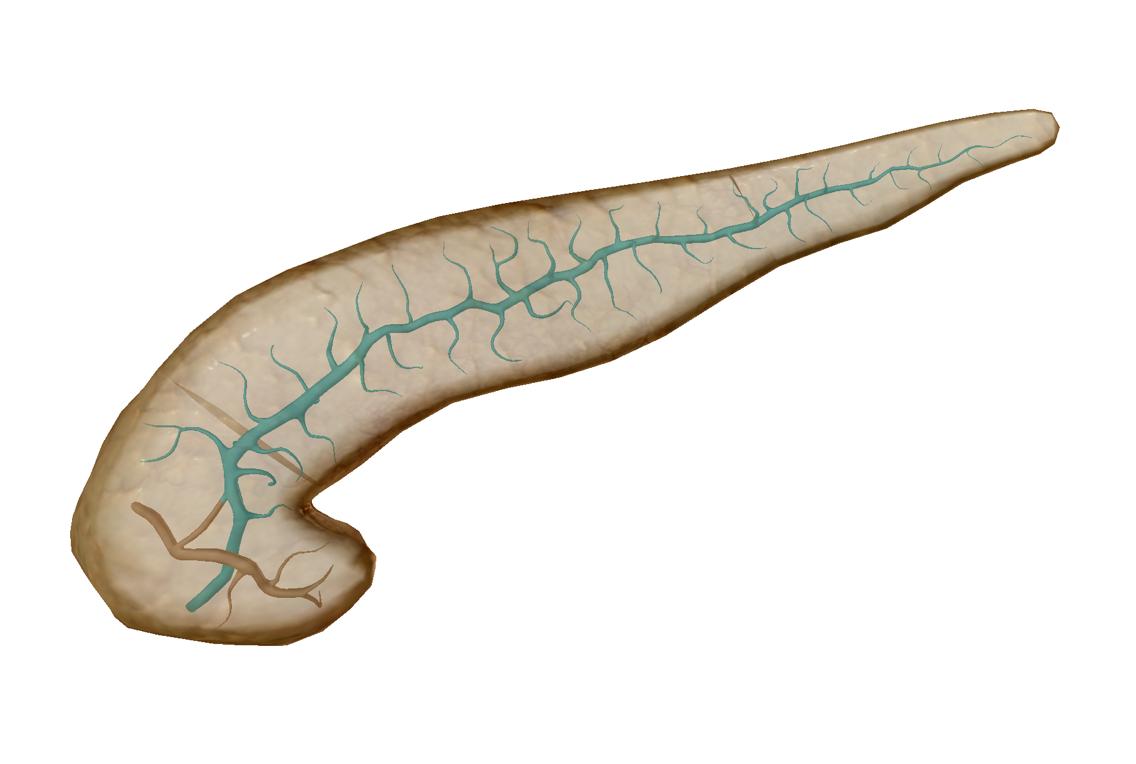 pancreas-main-duct