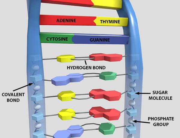molecular-dna-screenshot-labels