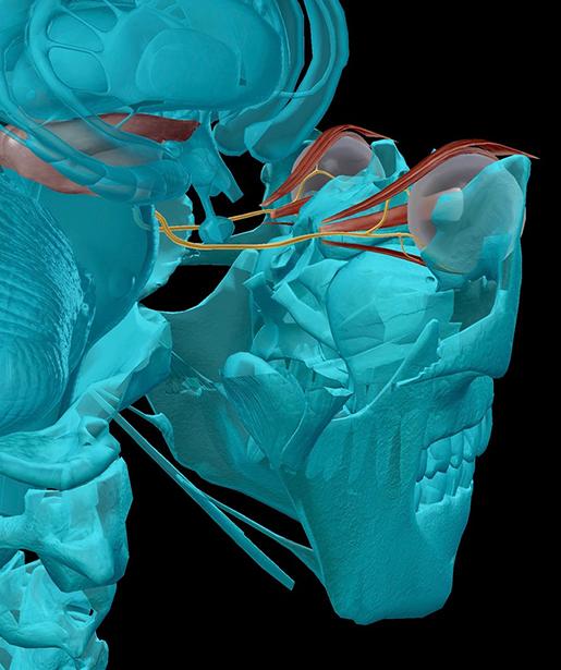 cranial-nerves-03-oculomotor-2