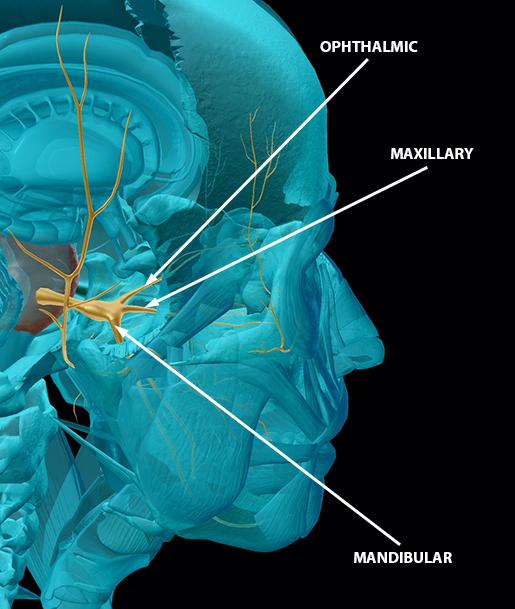 cranial-nerves-05-trigeminal-update