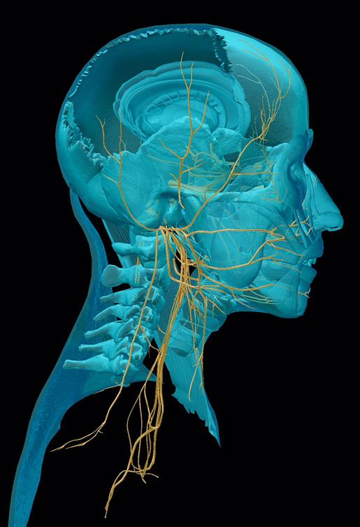 cranial-nerves-all