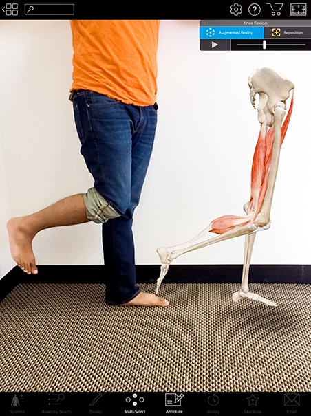 Visible Body Knee Flexion AR