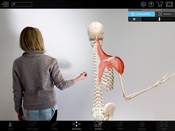 Visible Body Shoulder Lateral Flexion AR