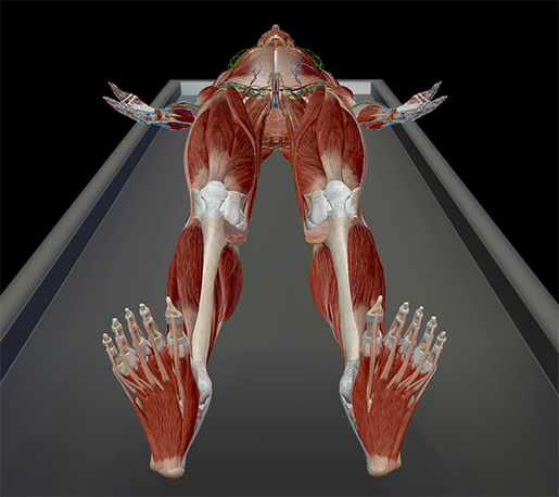 anatomical-position-direction-supine