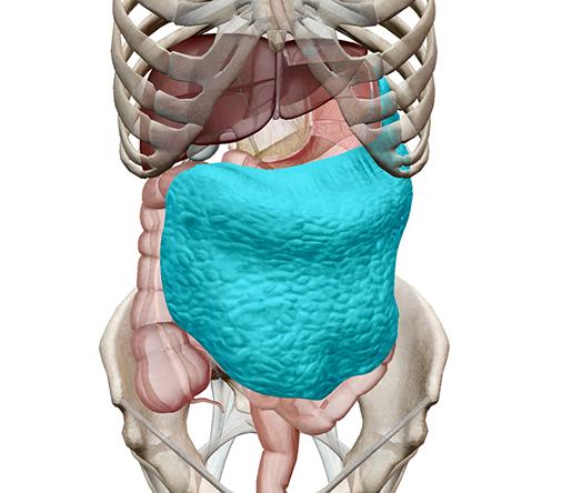 peritoneum-greater-omentum-m