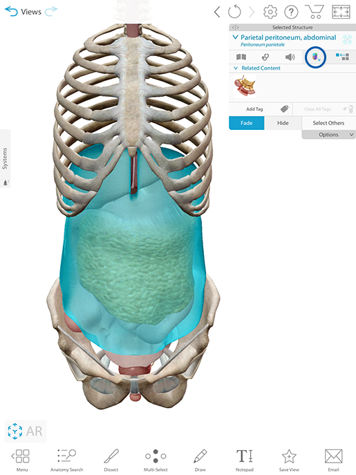 peritoneum-landmarks-button-m