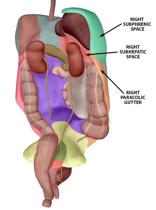 peritoneum-landmarks-right-upper-quadrant-f
