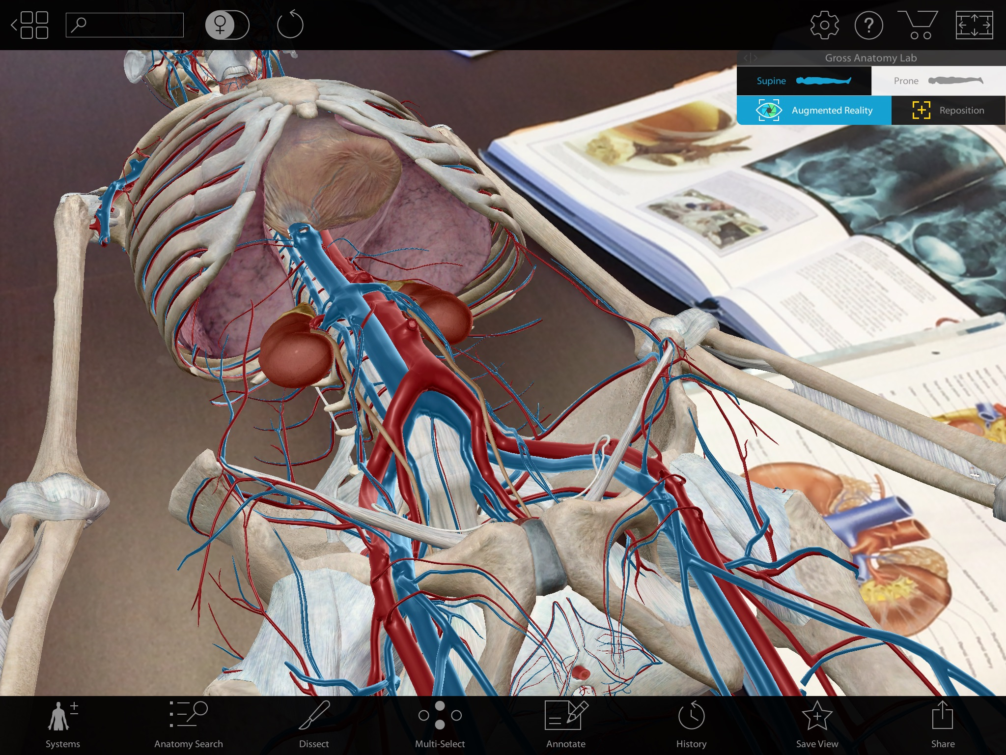 Augmented-Reality-3D-Anatomy-Urinary-System.jpg