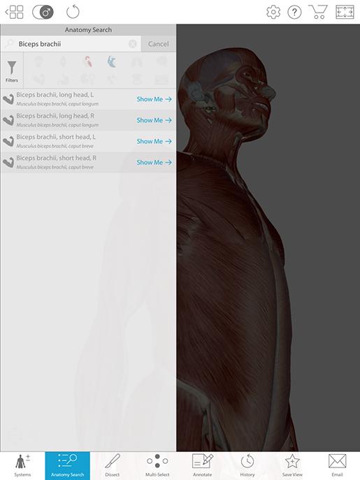 biceps-brachii-anatomy-search-feature