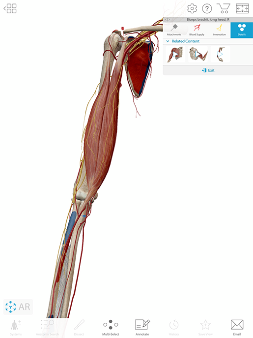 biceps-brachii-content-box-additional-features