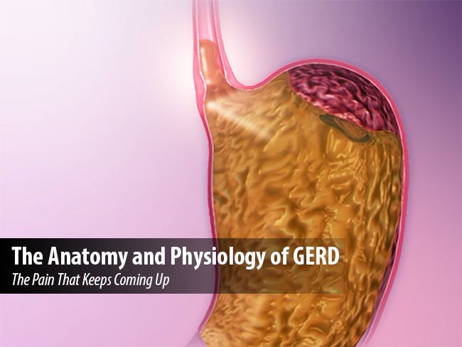 The Anatomy and Physiology of GERD