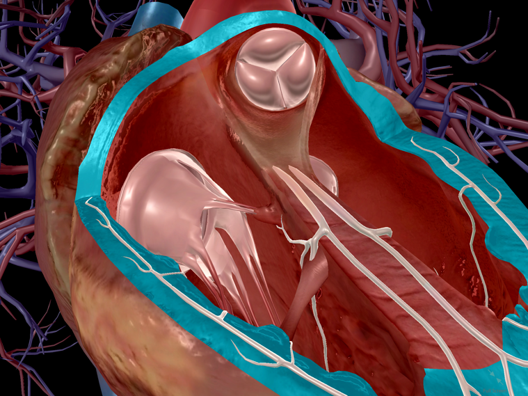 That Boom Boom Pow: Virtual Dissection (sort of) of the Human Heart