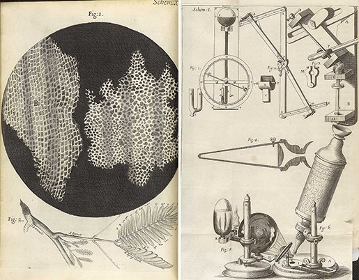 histology-hooke-micrographia-pages