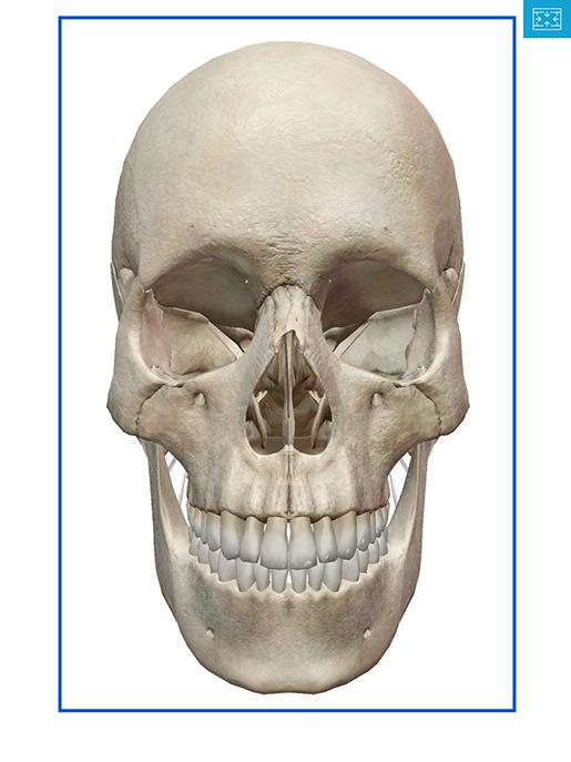 coronal-section-draw-rectangle