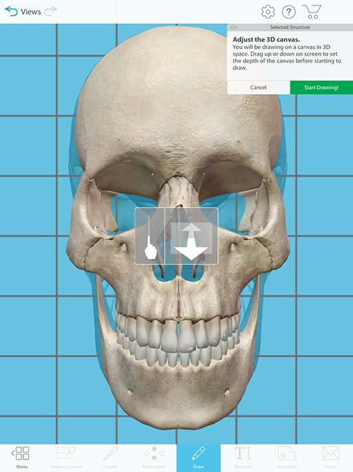coronal-section-draw-tool-depth