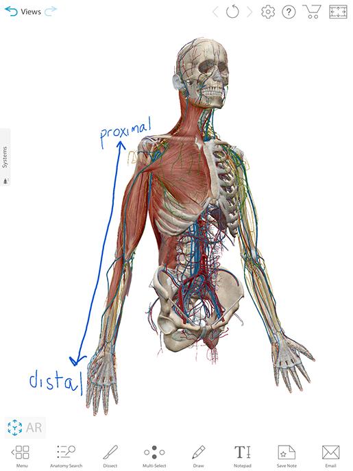 distal-proximal-note-view
